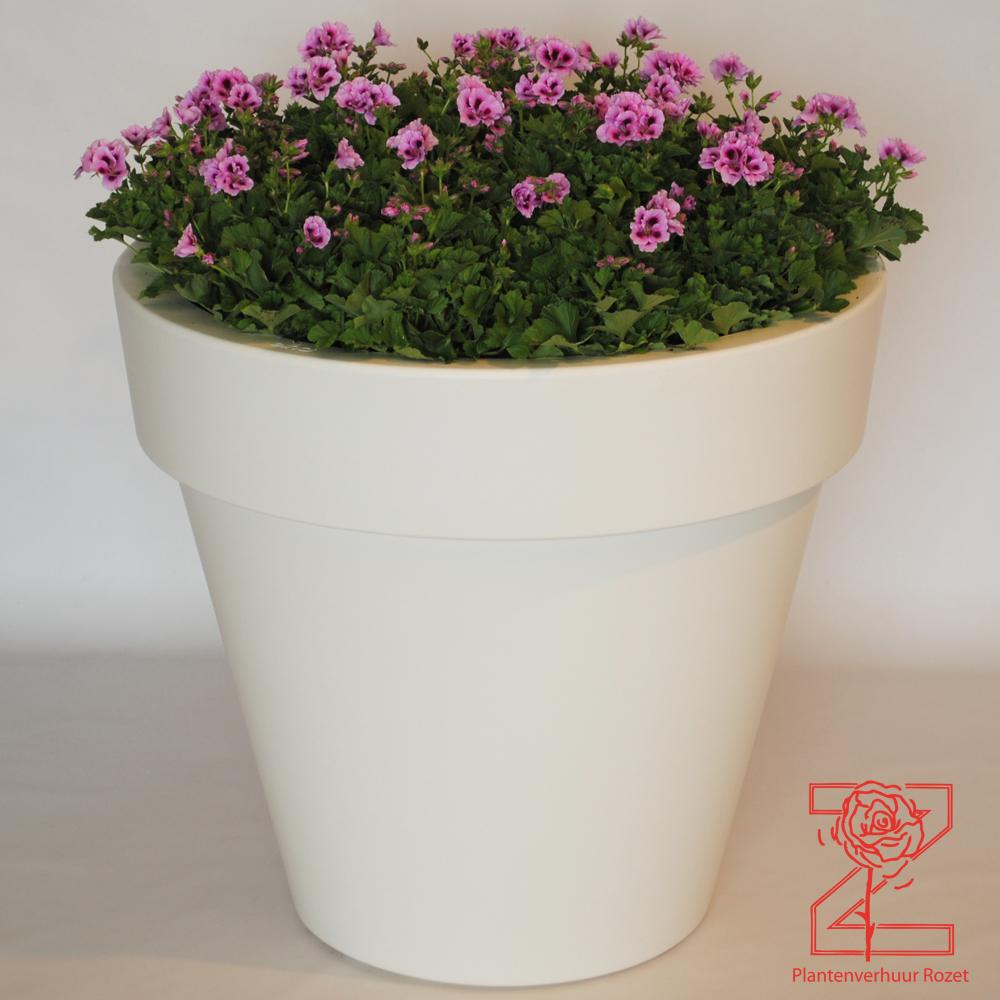 Verhuur planten plantenverhuur rozet - Buiten idee ...