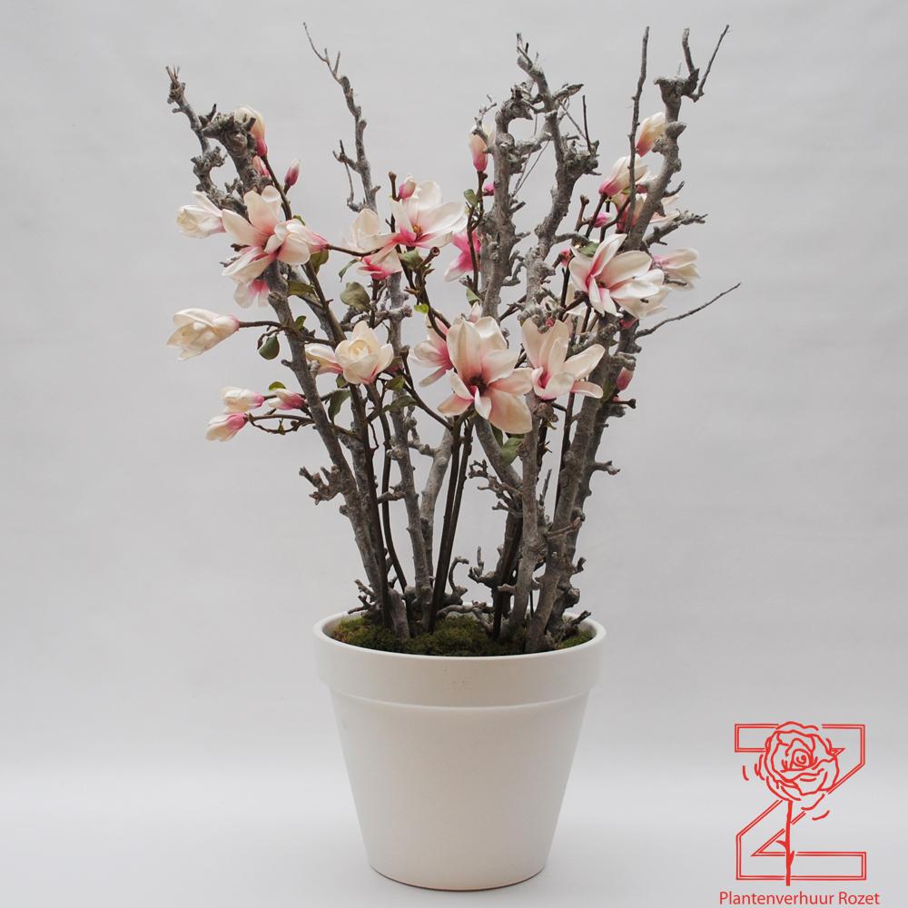 Verhuur bloemdecoraties plantenverhuur rozet for Bloemen decoratie