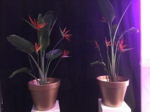 verhuurplanten